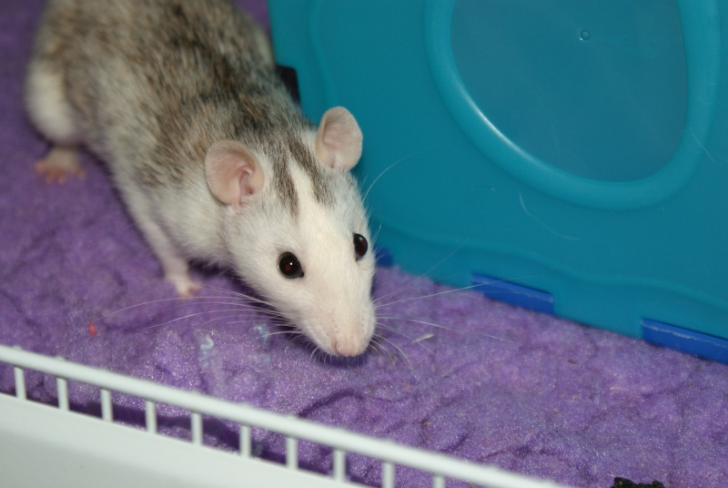 Lisa et ses 7 ratons Dsc01631