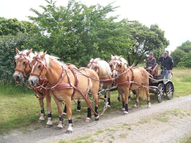 Guyonne, la passion du cheval... avec ses blonds ! 100_1910