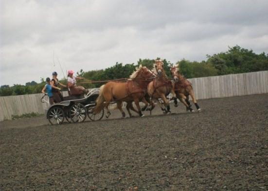 Guyonne, la passion du cheval... avec ses blonds ! Att_a_11