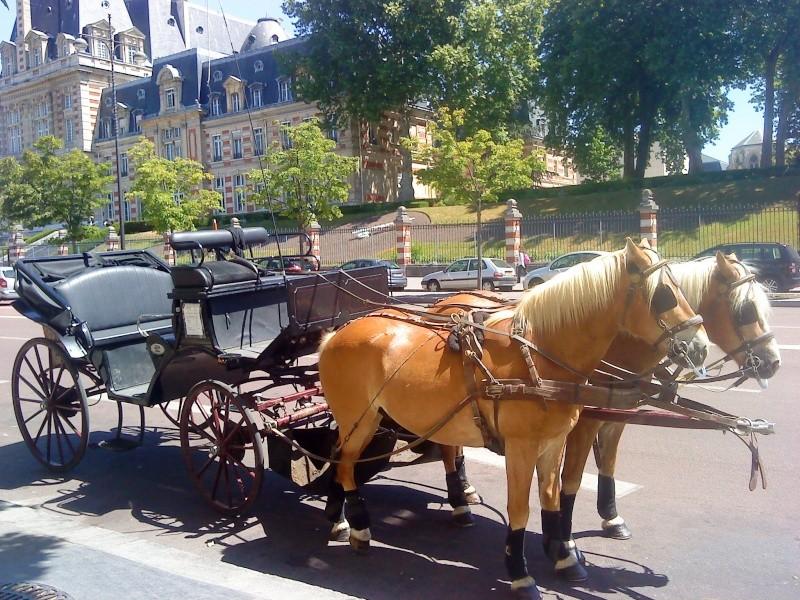Guyonne, la passion du cheval... avec ses blonds ! Dsc00010