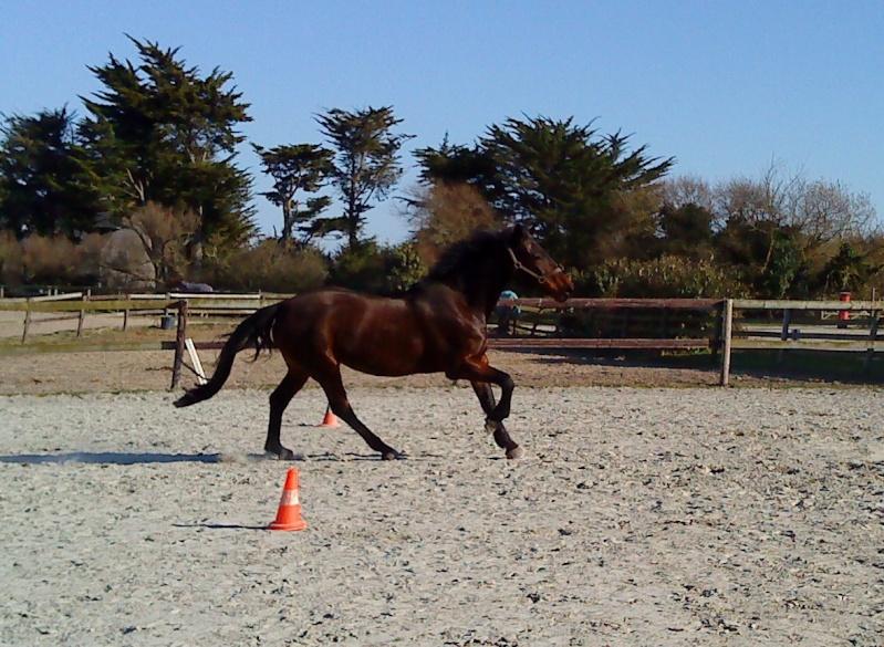 Guyonne, la passion du cheval... avec ses blonds ! Dsc01010