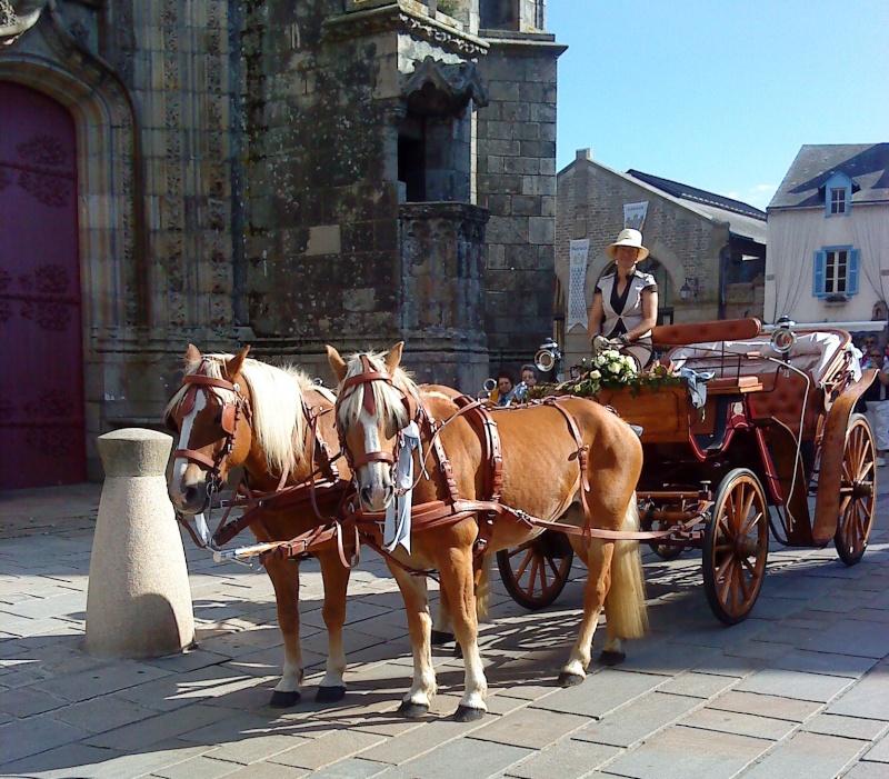 Guyonne, la passion du cheval... avec ses blonds ! - Page 2 Dsc02910