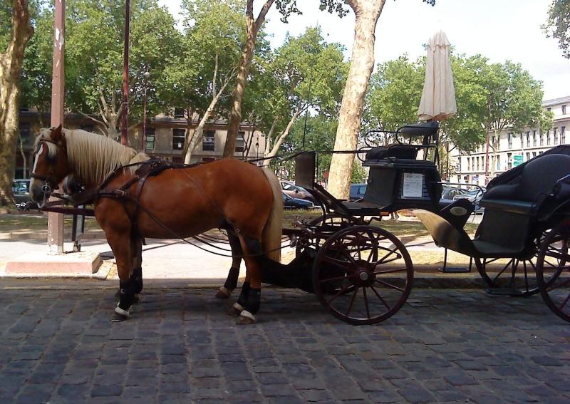 Guyonne, la passion du cheval... avec ses blonds ! Dsc04011