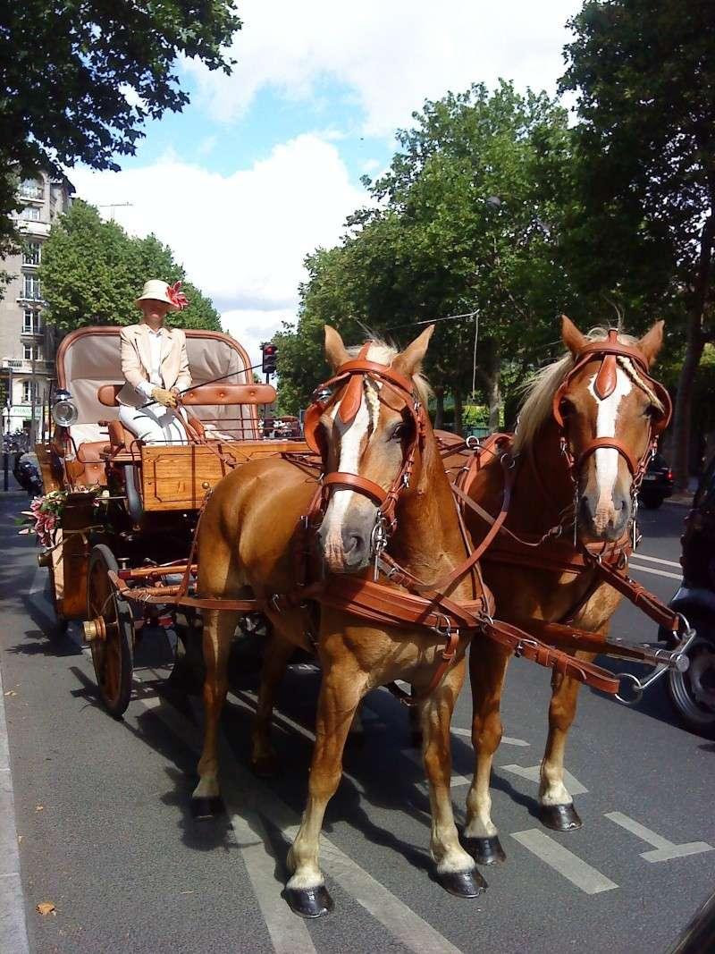 Guyonne, la passion du cheval... avec ses blonds ! - Page 2 Dsc04110