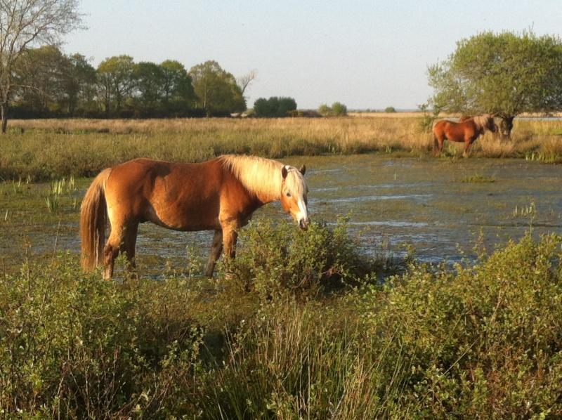 Guyonne, la passion du cheval... avec ses blonds ! - Page 2 Img_0410