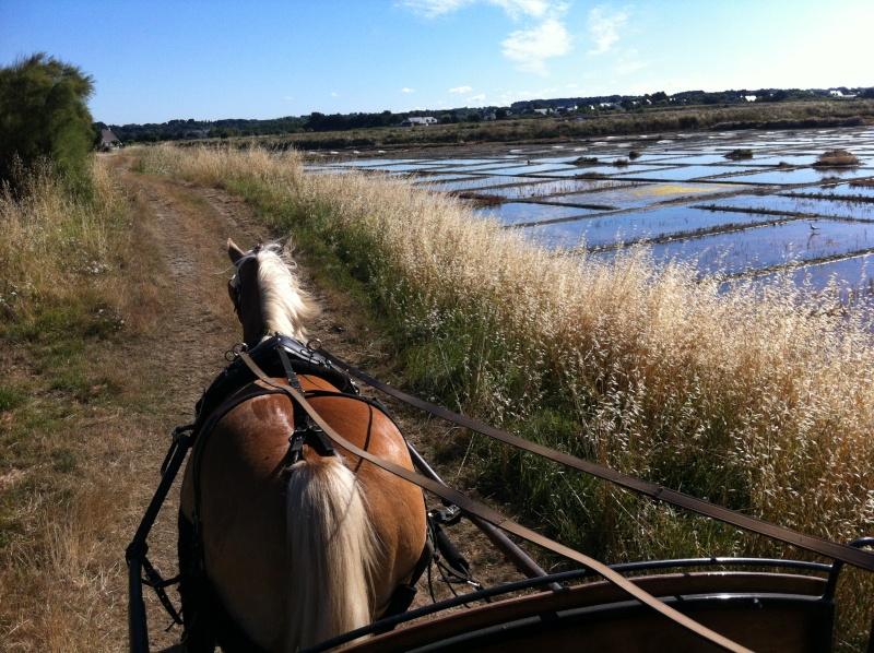 Guyonne, la passion du cheval... avec ses blonds ! Img_1210