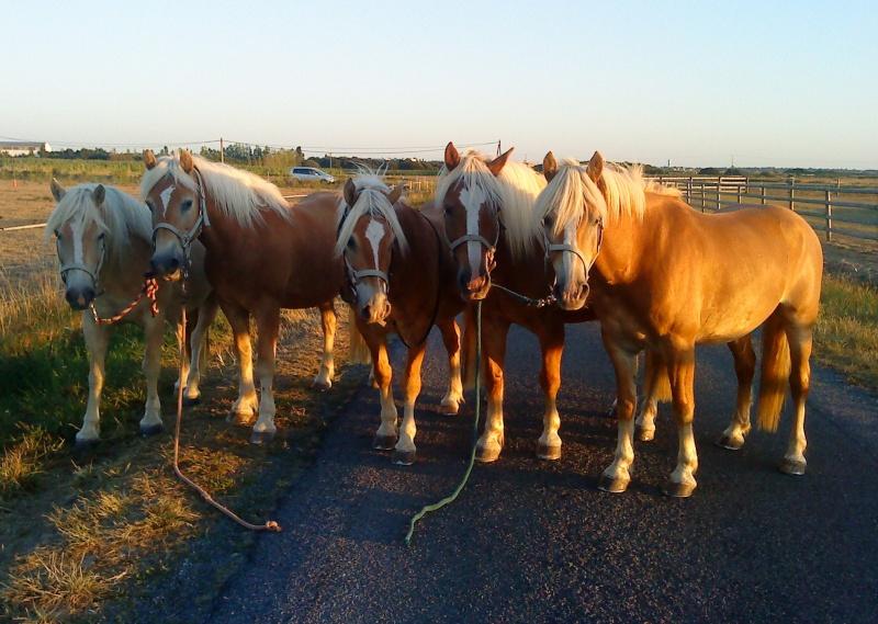 Guyonne, la passion du cheval... avec ses blonds ! Les_5_10