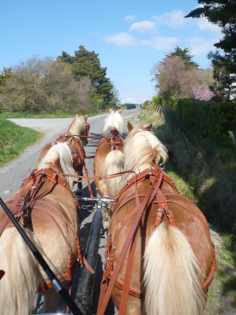 Guyonne, la passion du cheval... avec ses blonds ! Les_ch10