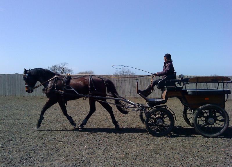 Guyonne, la passion du cheval... avec ses blonds ! Lune_110