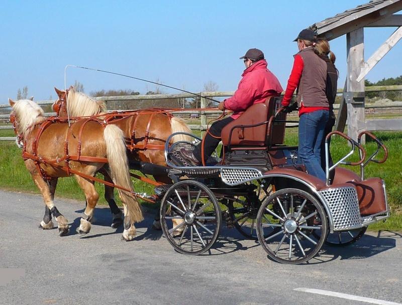 Guyonne, la passion du cheval... avec ses blonds ! P1000510