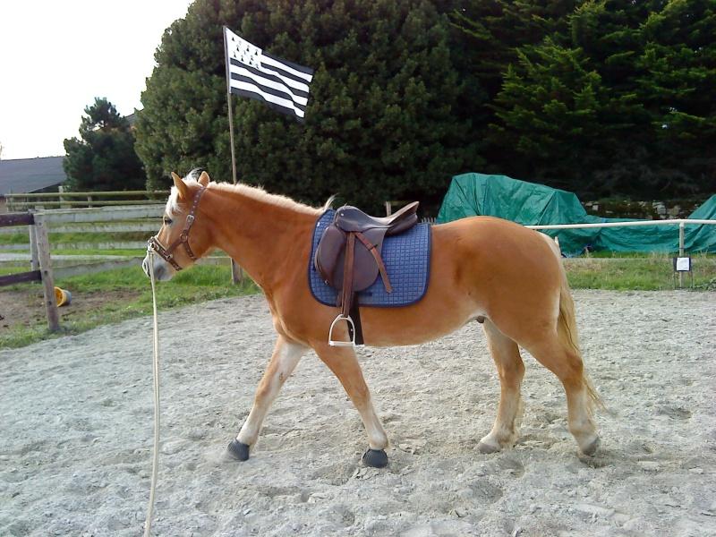 Guyonne, la passion du cheval... avec ses blonds ! Prime_10