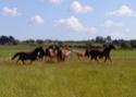 Guyonne, la passion du cheval... avec ses blonds ! Dsc01511