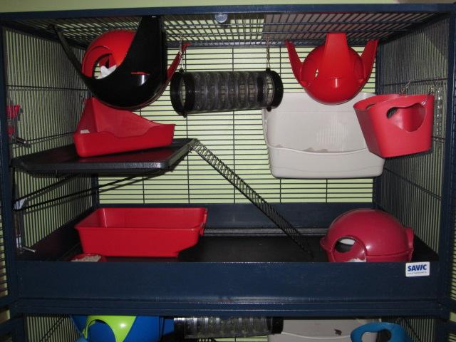 Post de suivi du sauvetage des petits rats de labo Img_1510