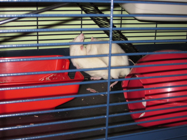Post de suivi du sauvetage des petits rats de labo - Page 2 Img_1511