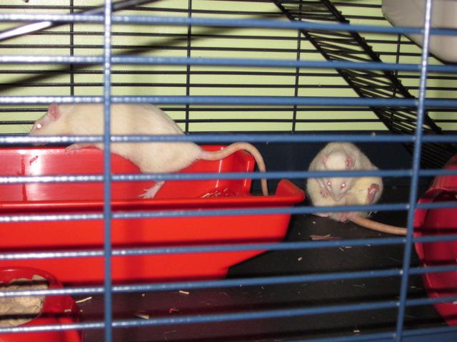 Post de suivi du sauvetage des petits rats de labo - Page 2 Img_1512