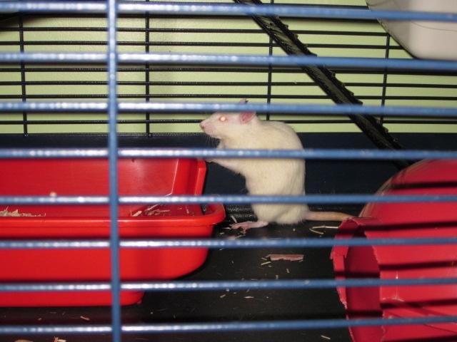 Post de suivi du sauvetage des petits rats de labo - Page 2 Img_1513