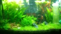 Aquarium 60L aquascape. Wp_20114