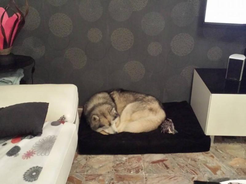 wolfy est a la maison  10171210