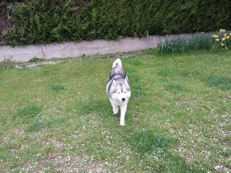 wolfy est a la maison  10177311