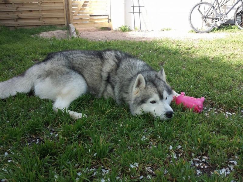 wolfy est a la maison  10245210