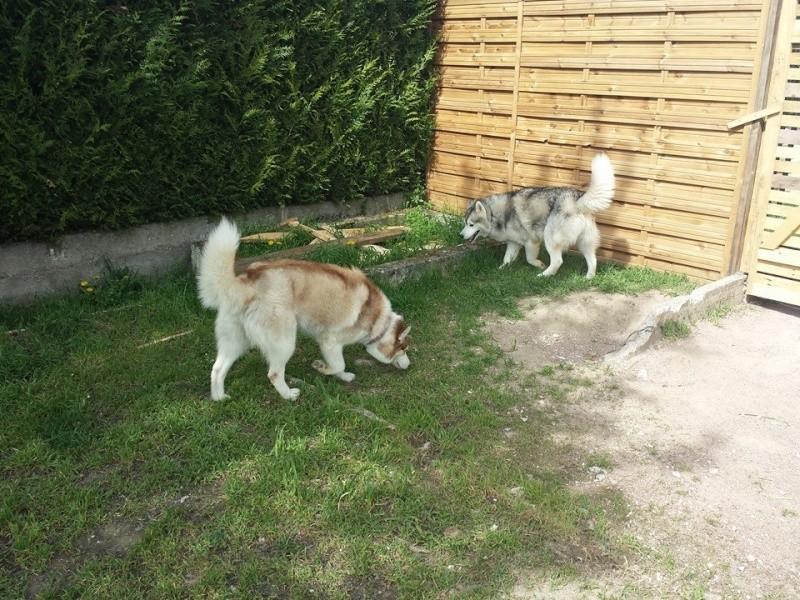 wolfy est a la maison  14587010