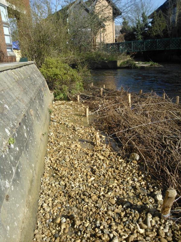 Hogsmill River Habitat Works/Wandle Trust- Volunteers Wp_00024