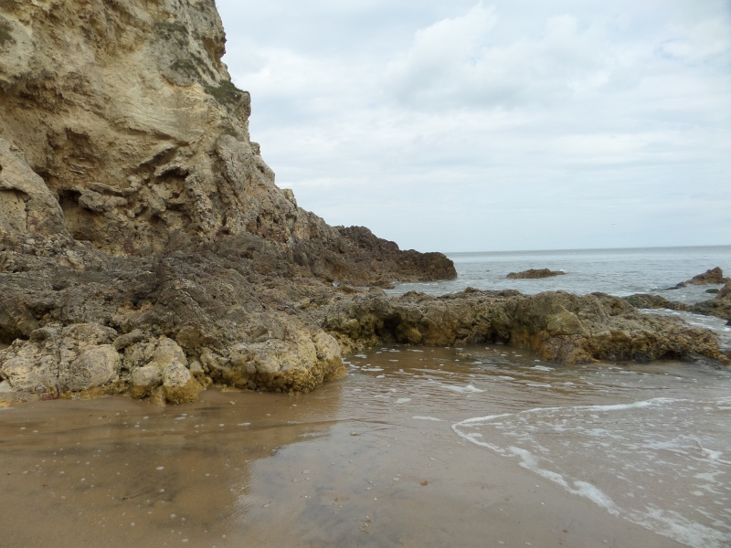 A walk along Marsden Bay getting used to my camera Sam_0141