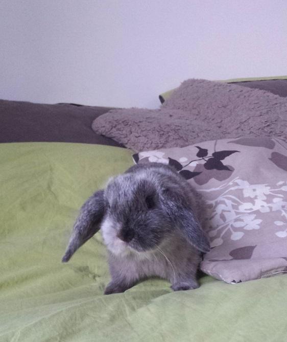 Litha, lapine bélier 20140310
