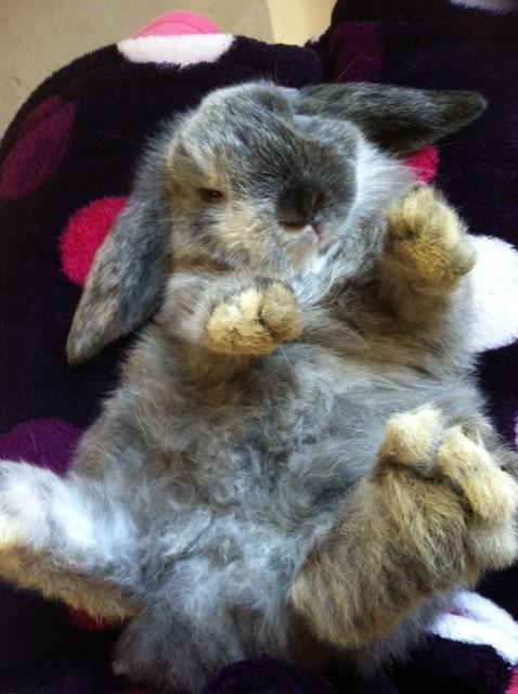 Litha, lapine bélier Photo_11