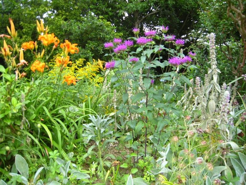 les plantes sauvages comestibles Img_0910