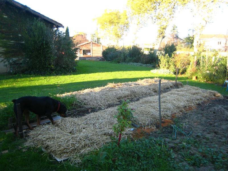 les mauvaises herbe dans le jardin - Page 2 Img_1812