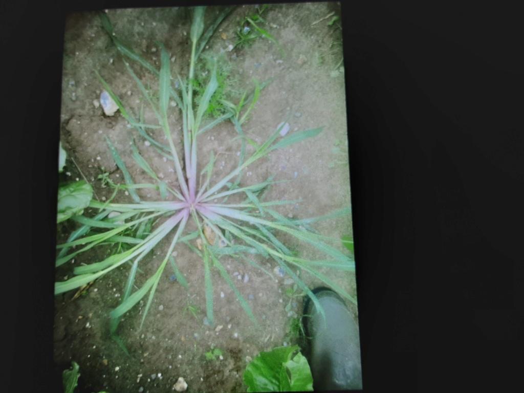 C'est quoi cette herbe ? - Page 2 20210712