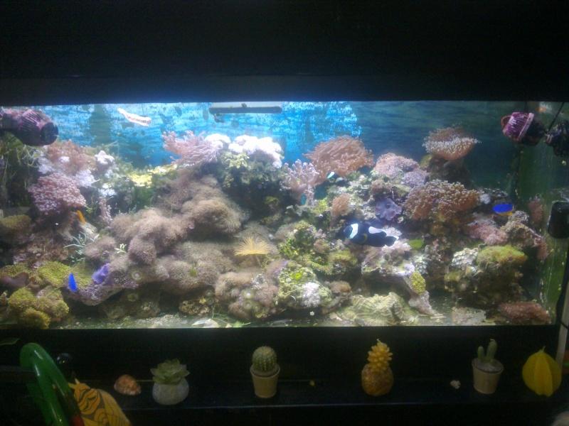 Bacs à coraux mous 06122010