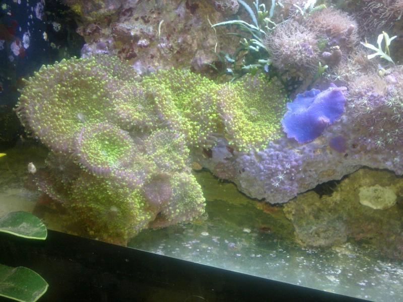 Bacs à coraux mous 06122011