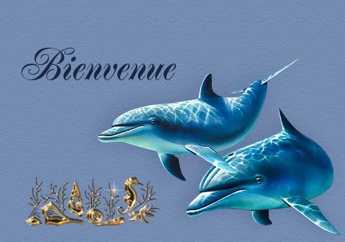 Présentation de reef60 Benven35