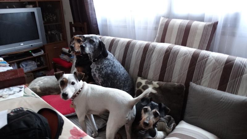 Le Parson Russell Terrier Dsc01113