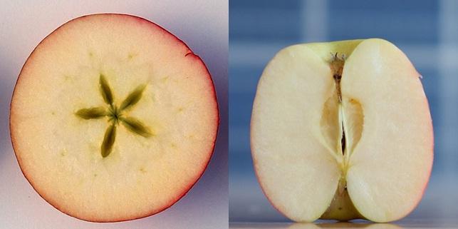 LA MANZANA DE LA TENTACIÓN Apple10
