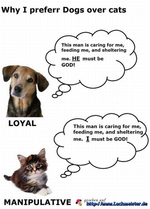 Hund vs. Katze oder so... Hunde-10