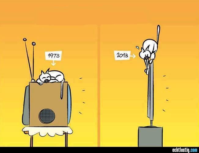 Witze - Seite 4 Katzen10