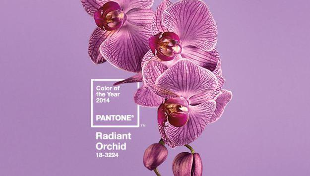 couleur de l'année 2014 Panton11