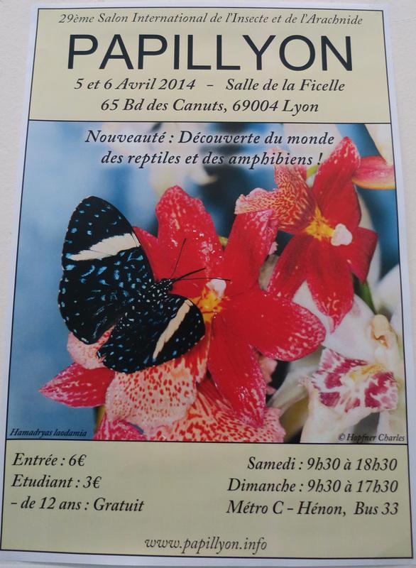 Papillyon 2014 Vfwa10