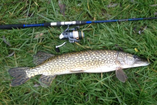 Votre pêche de janvier 2014 Bec10