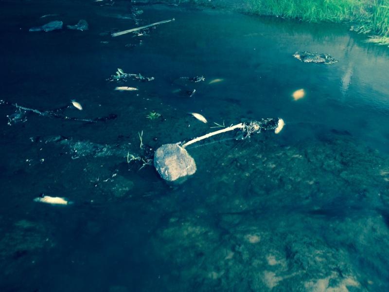 pollution de la Bibiche au purin Downlo27