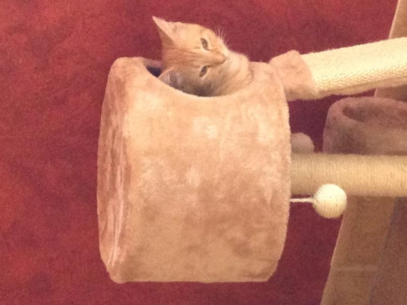 indiana chaton adopté en décembre Img_0410