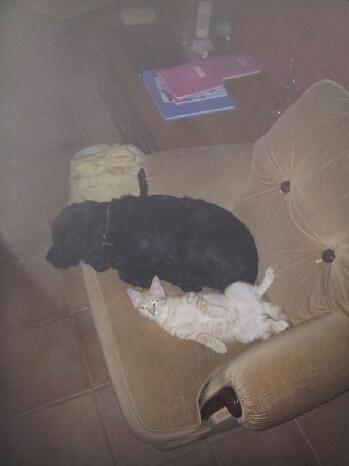 indiana chaton adopté en décembre Img_0411