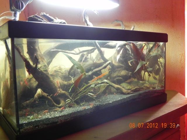 L'eau des biotopes amazoniens 08310
