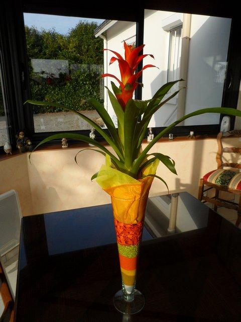 Petit renseignement de cette plante.......Guzmania 00115