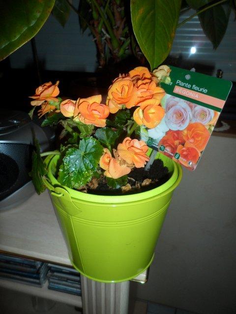 Les plantes d'intérieur de Madame - Page 3 Bagoni10