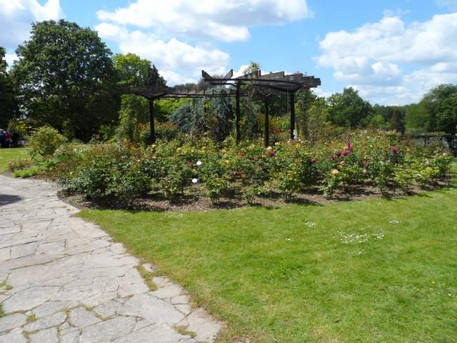 Parc floral - La Roseraie Rosera16