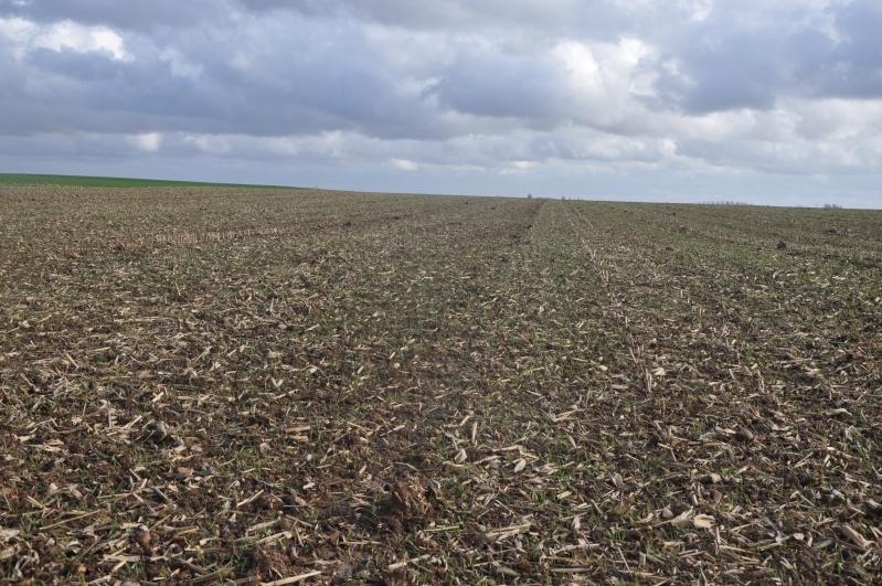 semis de blé 2013-2014 - Page 20 Ble_0110